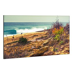 Surfhund Leinwandbild Coxos
